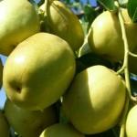Những tác dụng tốt đến khó tin của quả táo ta